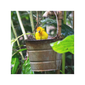 Cute, yellow bird bathing in a bucket stretched canvas print