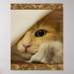 Cute Yellow Kitten Poster Print