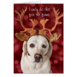 Cute Yellow Lab dog with Antlers