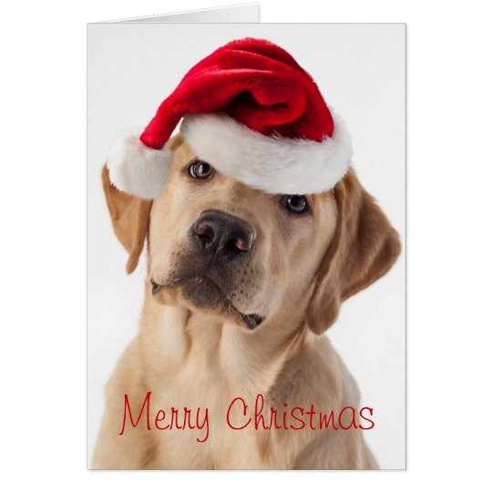 Cute Yellow Lab dog with Santa Hat Christmas