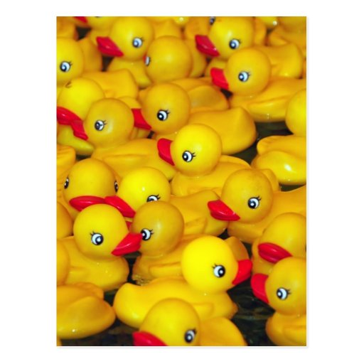 Cute yellow rubber duckies postcards