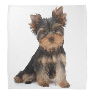 Cute yorkie puppy bandana