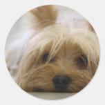 Cute Yorkie Round Sticker