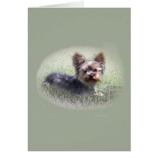 Cute Yorkie Terrier Buddy Custom Greeting Card