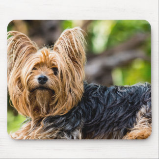 Cute Yorkshire Terrier Dog in garden Mouse Pad