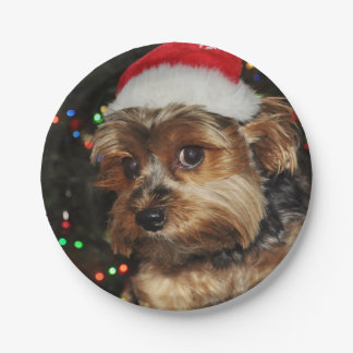 Cute Yorkshire Terrier dog with Santa hat Paper Plate