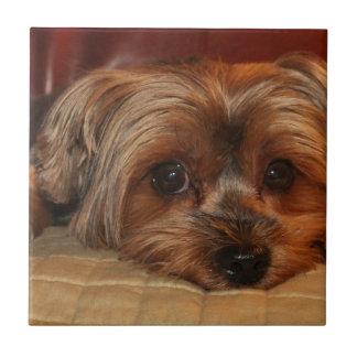Cute yorkshire terrier dog,yorkie tile