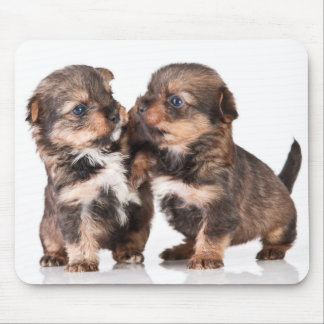 Cute Yorkshire Terrier Puppies Mouse Mat