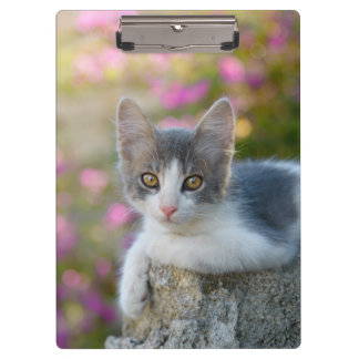 Cute Young Bicolor Cat Kitten Flowers Photo on Clipboard