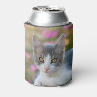 Cute Young Bicolor Cat Kitten Fluffy Photo  Bawdle Can Cooler