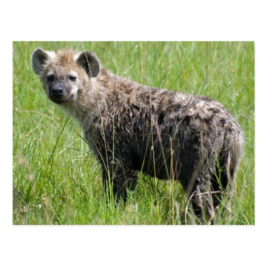 Cute Young Hyena with Wet Fur in Green