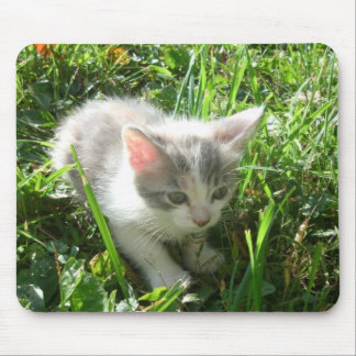 Cute Young Kitten Mouse Pad