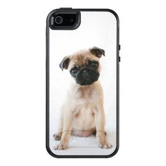 Cute Young Pug Dog OtterBox iPhone 5/5s/SE Case