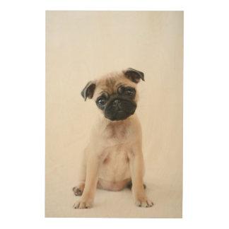 Cute Young Pug Dog Wood Prints