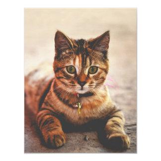 Cute Young Tabby Cat Kitten Kitty Pet 11 Cm X 14 Cm Invitation Card