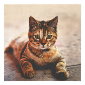 Cute Young Tabby Cat Kitten Kitty Pet 13 Cm X 13 Cm Square Invitation Card