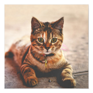 Cute Young Tabby Cat Kitten Kitty Pet Magnetic Invitations