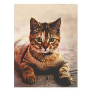 Cute Young Tabby Cat Kitten Kitty Pet Postcard