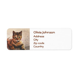 Cute Young Tabby Cat Kitten Kitty Pet Return Address Label