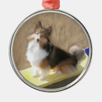 CuteShetland Sheepdog sitting on a teeter Christmas Ornament