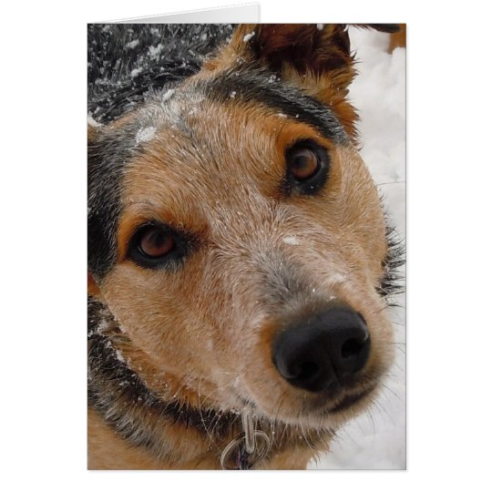 Cutest Australian Cattle Dog Christmas or Holidays Card