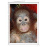 Cutest Baby Orangutan , Great Ape of Borneo Note Card