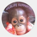 Cutest Baby Orangutan Orphan Round Sticker