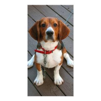 Cutest Beagle Dog Ever Personalized Photo Card