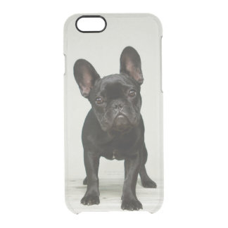 Cutest French Bulldog Puppy Clear iPhone 6/6S Case