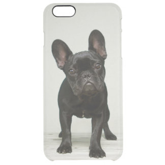Cutest French Bulldog Puppy Clear iPhone 6 Plus Case