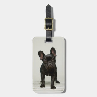Cutest French Bulldog Puppy Luggage Tag