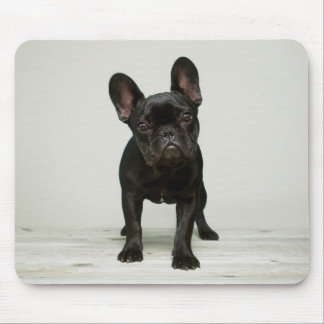 Cutest French Bulldog Puppy Mouse Pad