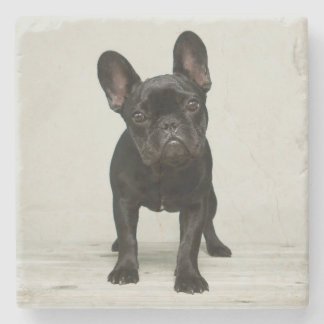Cutest French Bulldog Puppy Stone Beverage Coaster