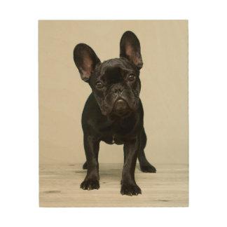 Cutest French Bulldog Puppy Wood Wall Art