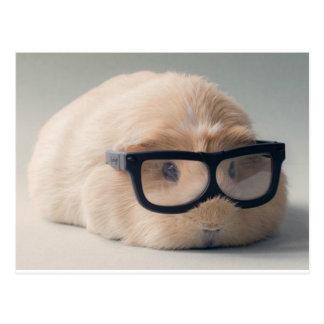 Cutest guinea pig wearing glasses postcard