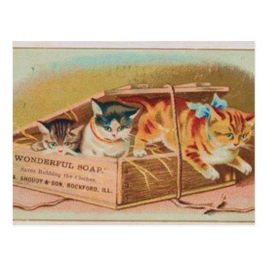 Cutest Kittens Soap Ad Postcard