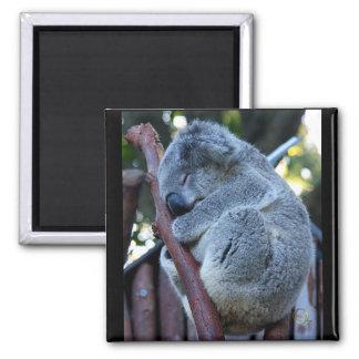 Cutie Pie Koala Square Magnet