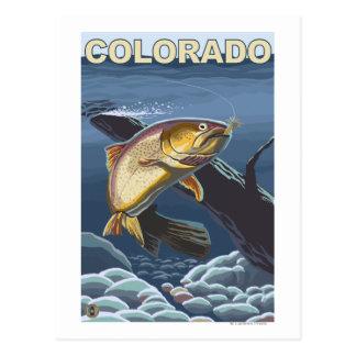 Cutthroat Trout FishingColorado Postcard