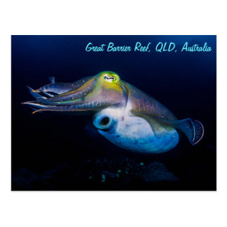 Cuttlefish on the Great Barrier Reef Postcard