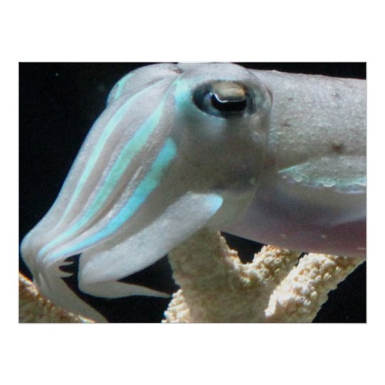 Cuttlefish Poster