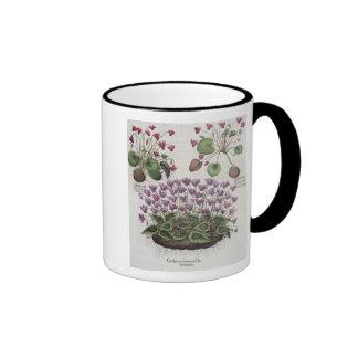 Cyclamen 1 Cyclamen serotinum foliis hederaceis Mugs