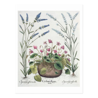 Cyclamen and Lavender: 1.Cyclamen Romanum; 2.Spica Postcard