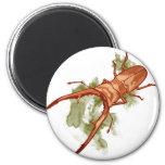 Cyclommatus Metallifer 冷蔵庫用マグネット