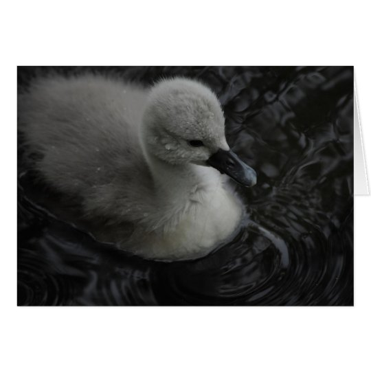 cygnet in grey card