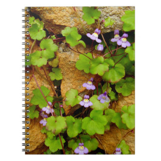 Cymbalaria Muralis Spiral Photo Notebook