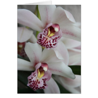 Cymbidium Orchid Card
