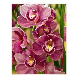 Cymbidium Orchid Announcements