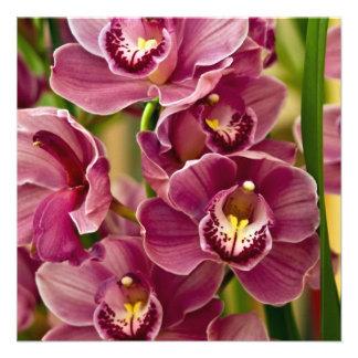Cymbidium Orchid Personalized Announcement