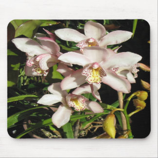 Cymbidium Orchid mousepad