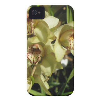 Cymbidium Orchids Blackberry Bold case